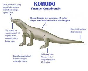 Komodo description