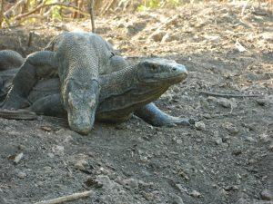 2 Days Trip - Komodo Dragon Tours